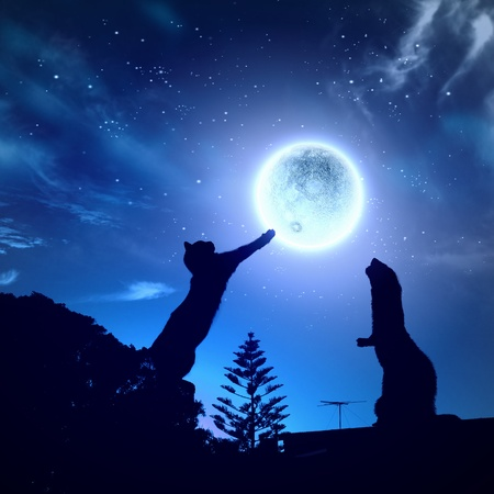 Silhouettes of animals in night sky with full moon photo