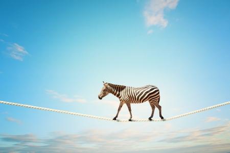 空の高ロープの上を歩いてシマウマのイメージ