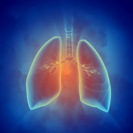 vital: Schematic illustration of human lungs with the different elements on a colored background  Collage  Stock Photo