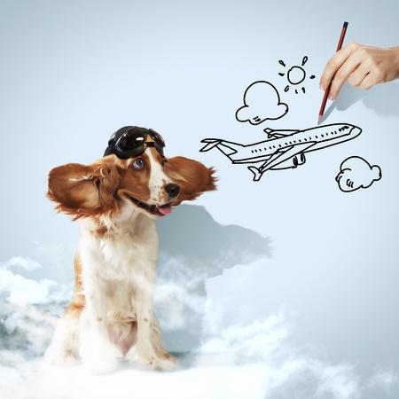 Image of funny spaniel dog in pilot helmet