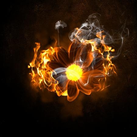 Illustration of flower in fire flames  Danger concept