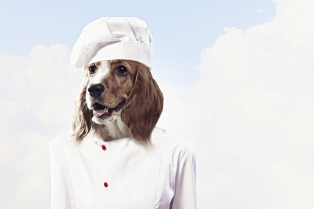 beg: Funny dog   dressed as a chef  Collage