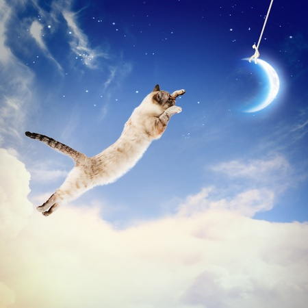 Image of cat in jump catching moon photo