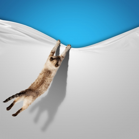 domestic cat: Image of jumping Siamese cat playing with with sheet
