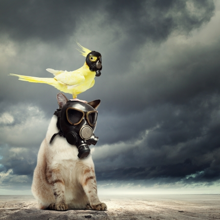 Cat and parrot in gas masks  Ecology concept photo