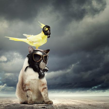 contaminacion del aire: Gato y loro en concepto de Ecolog?a m?scaras de gas Foto de archivo