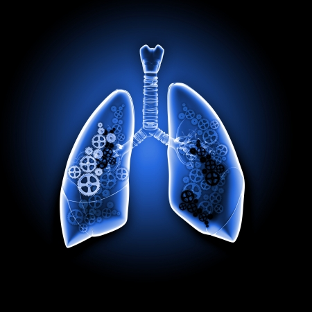 bronchiole: Human lungs with mechanisms  Health and medicine