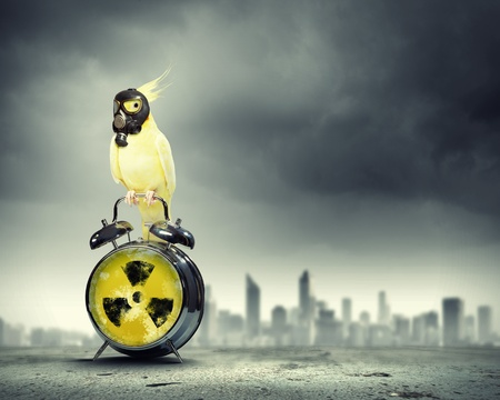 Image of yellow parrot in gas mask sitting on alarm clock  Ecology concept Stock Photo - 21979348