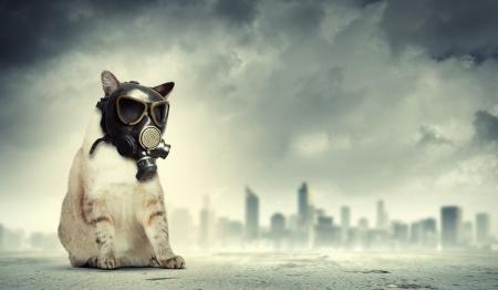 devastation: Image of cat in gas mask  Ecology concept