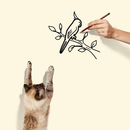 mew: Image of siamese cat catching drawn bird Stock Photo