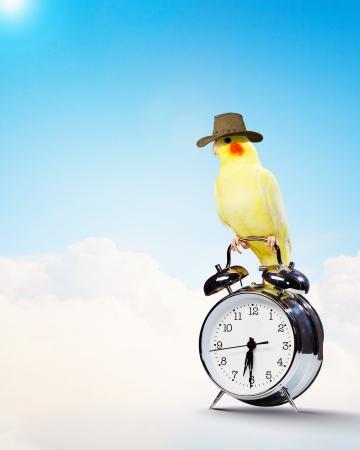 目覚まし時計の上に座って黄色いオウムの画像