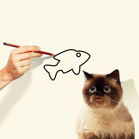 frisky: Image of siamese cat catching drawed fish Stock Photo