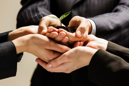 Close up of businessmen hands with sprout in palms photo