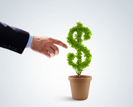Image of human hands holding plant shaped like dollar photo