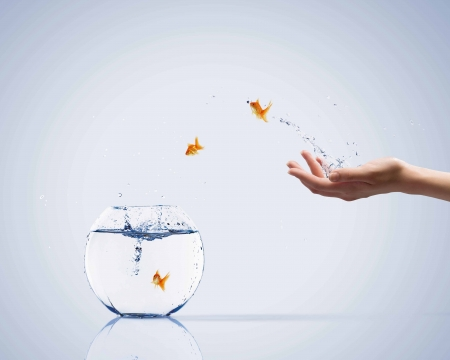 Aquarium with gold fish jumping out of water Stock Photo - 23499392