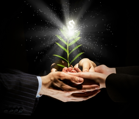 Close up image of human hands holding sprout of money tree