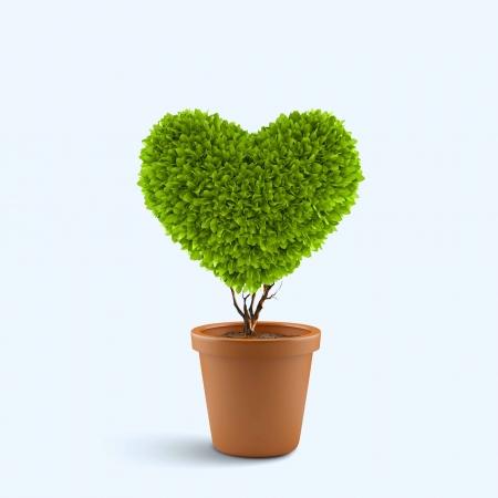 심장 모양의 냄비에 식물의 이미지 스톡 콘텐츠