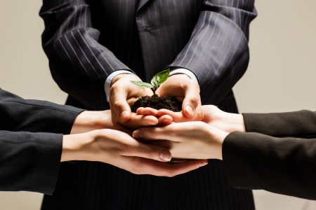 24199904: Close up of businessmen hands with sprout in palms Stock Photo