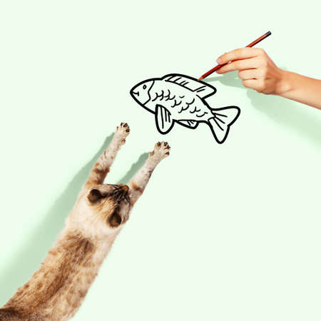 drawed: Image of siamese cat catching drawed fish Stock Photo
