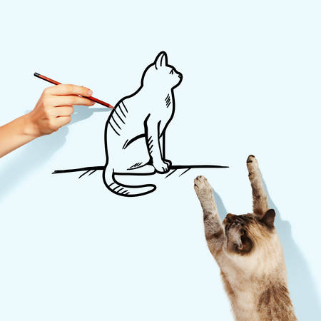 frisky: Image of siamese cat catching drawn cat