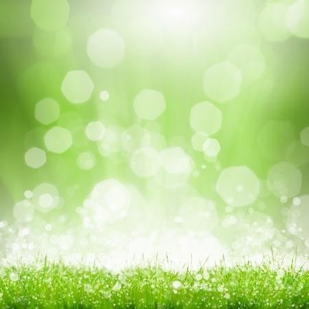 schittering: Groene zomer weide met schittering van de zon en stralen