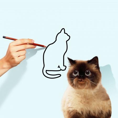 シャム猫キャッチ描かれた猫のイメージ 写真素材