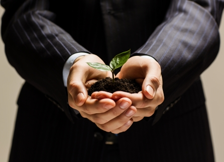 Close up of businessman hands with sprout in palms photo