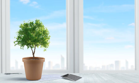 ecologist: Conceptual image of green plant in pot