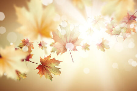 Conceptual image with colorful leaves flying in air photo