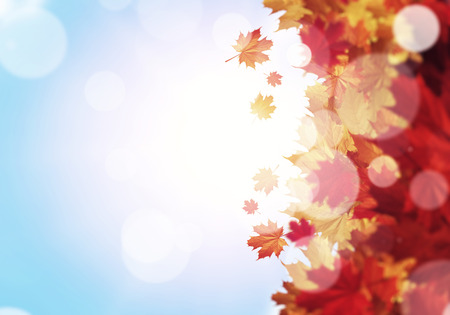 Background image with autumn leaves   Stock Photo