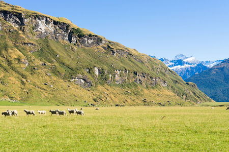 newzealand: Natural landscape of New Zealand alps and meadows