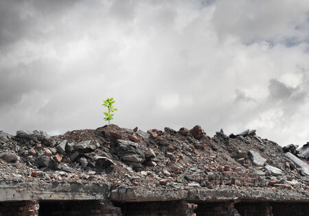 Conceptual image of green sprout growing on ruins photo