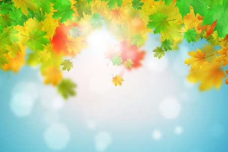 Background conceptual image with autumn leaves. Place for text photo