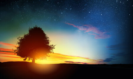 Natural scene with silhouette of tree against sunset light photo