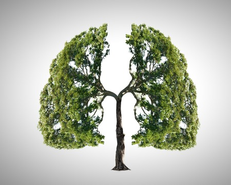 tree shape': Conceptual image of green tree shaped like human lungs