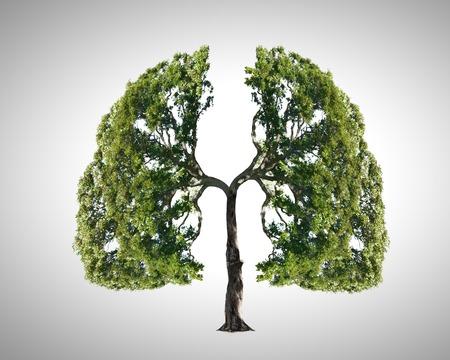 Conceptueel beeld van groene boom in de vorm van menselijke longen Stockfoto