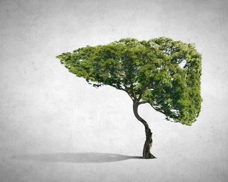 人間の肝臓のような形をした緑の木のイメージ 写真素材