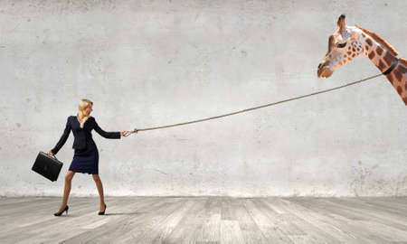 lead rope: Young pretty businesswoman holding giraffe on lead