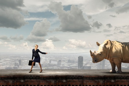 lead rope: Young pretty businesswoman holding rhino on lead