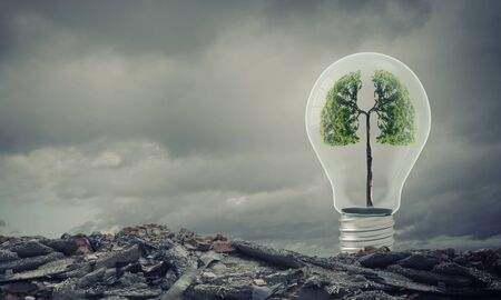 arbol de problemas: Ecology concept with green tree inside of light bulb