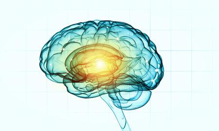 inteligencia: Concepto de la inteligencia humana con el cerebro humano en el fondo blanco Foto de archivo