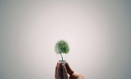 arbol de problemas: Concepto de la ecología con el árbol verde dentro de bombilla