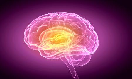 cerebro: Imagen Ciencia con el cerebro humano sobre fondo morado Foto de archivo
