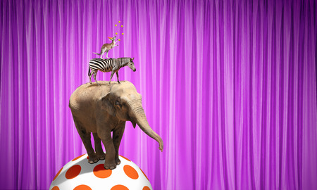 animaux cirque: Circus animals standing in stack and balancing on ball Banque d'images