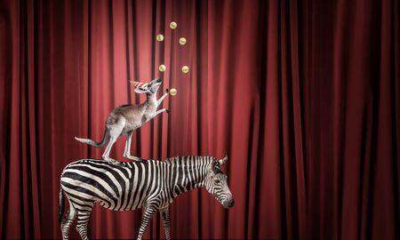 animaux cirque: Les animaux de cirque debout dans la pile et en �quilibre sur ballon