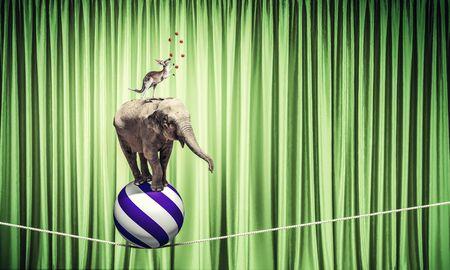 animaux cirque: Les animaux de cirque debout dans la pile et en �quilibre sur la corde