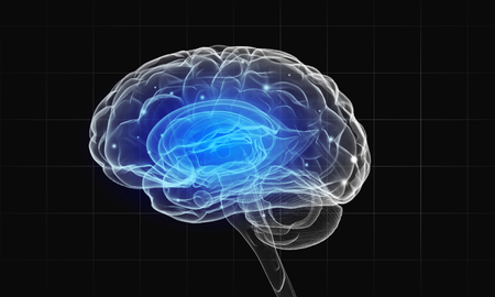 brain function: Science image with human brain on dark background