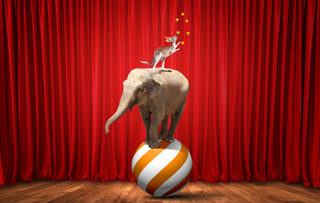 animaux cirque: Circus animals standing in stack and balancing on rope