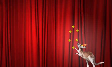 juggling: Circus kangaroo standing on ball and juggling with balls Stock Photo