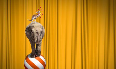 animaux cirque: